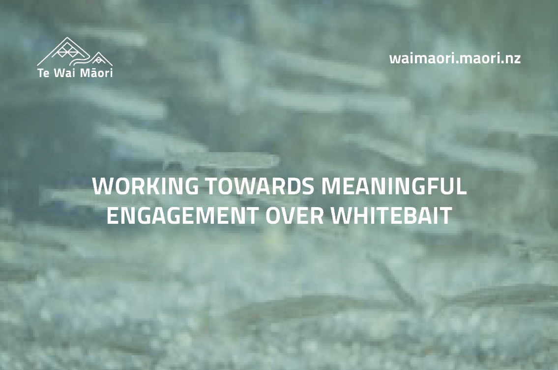Working towards meaningful engagement over whitebait