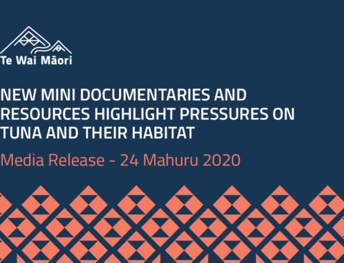 New mini documentaries and resources highlight pressures on tuna and their habitat