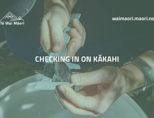Checking in on kākahi, the little-known freshwater barometer